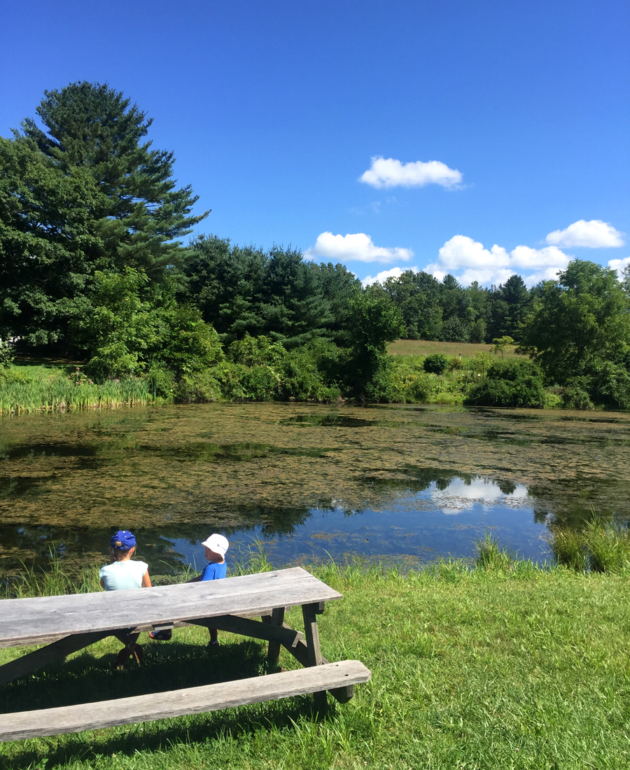 Picnic at the White Memorial Conservation Center — Delicious & Sons